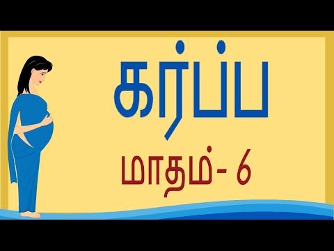 Pregnancy   Tamil   Month by Month    Month 6   கர்ப்பம் மாதம் 6    Week 21 to Week 24