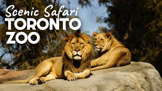 Toronto Zoo Scenic Safari | Opening Day Drive Through and Review