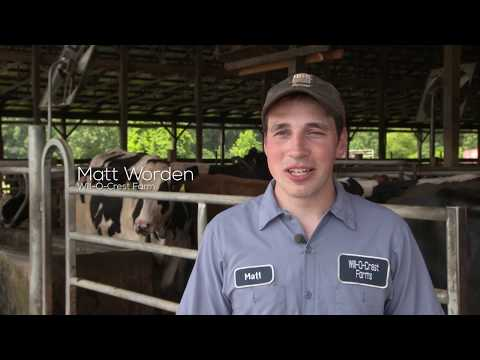 Sustainable Dairy Farms
