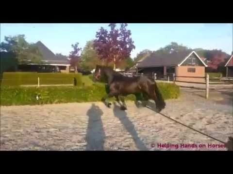 Information about Headshaking Horses
