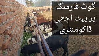 Goat Devorming Practical video | Goat Devorming Spray | bakri ki