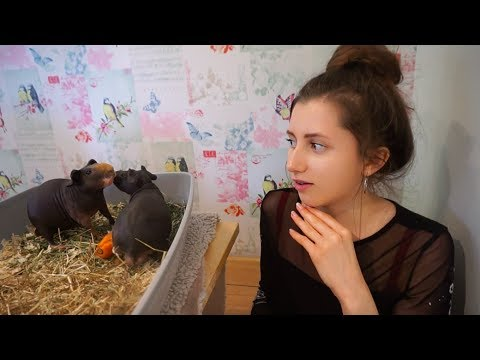 Answering Your Pet Questions! | ft the skinny pigs