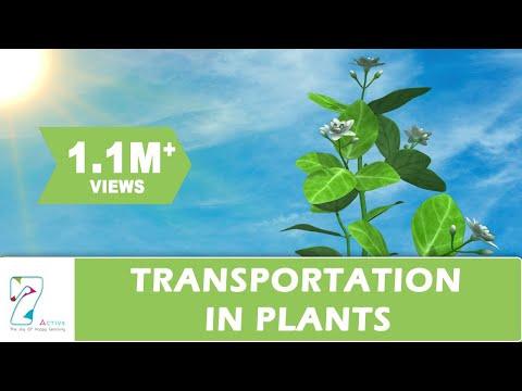 Transportation in Plants