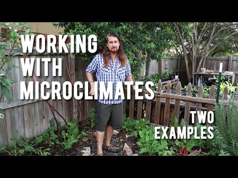 Working With Microclimates - Two Examples