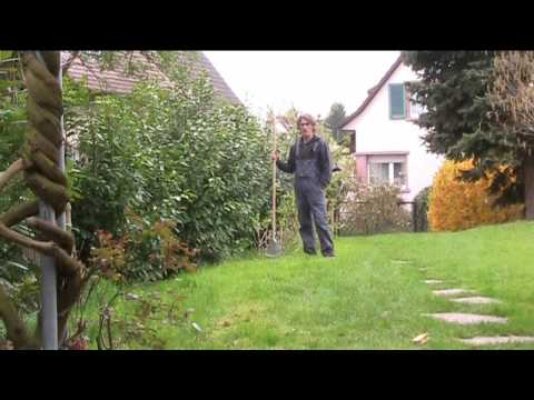 get rid of moss in lawn