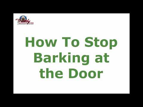 How To Stop Barking at the Door   Top Tips