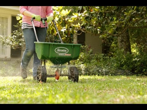 How To Grow Green Grass
