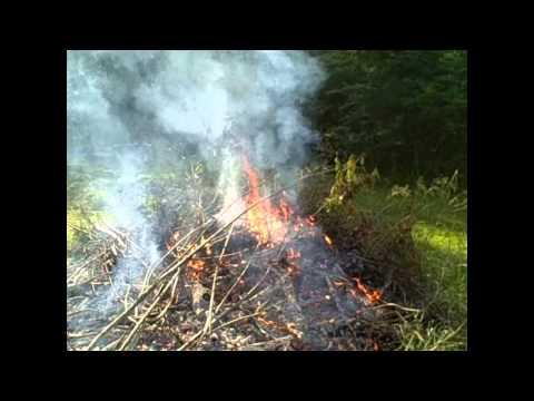 Making wood ash for garden soil - prepper survival