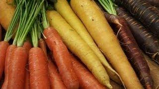 Growing Carrots: Red, Yellow, Purple \u0026 Orange