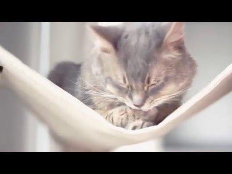 Royal Canin: How to Care for Indoor Cats