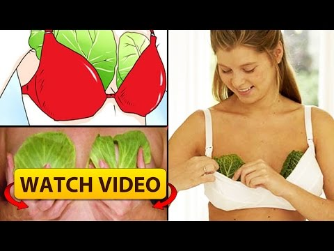 WHY WOMEN ARE PUTTING CABBAGE LEAVES ON THEIR BREAST, REASON BEHIND IT WILL MAKE YOU HAPPY!