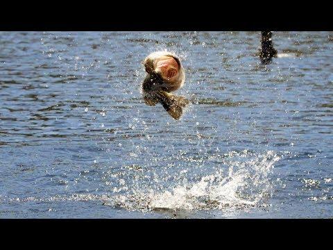 Crazy Frog Fishing Blow Ups! | Teckel Sprinker Frog
