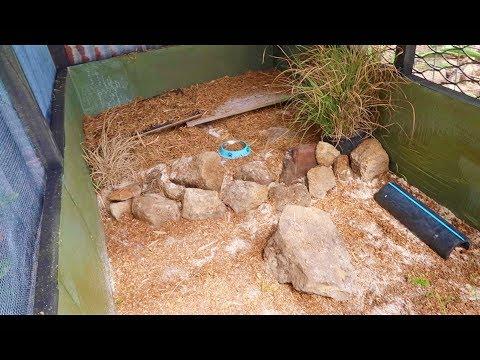 NEW OUTDOOR REPTILE ENCLOSURE! (Bird Aviary Conversion)