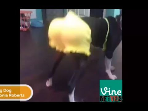The Best Vines of August!