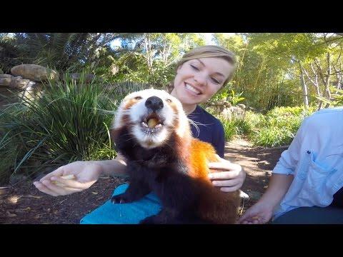 Adventure at the Australia Zoo!
