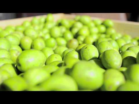 Cure Olives. Part 1. Get them.