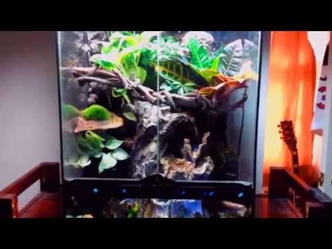 Crested Gecko Paludarium / Vivarium / Terrarium Update