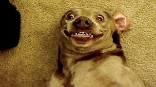 🤣 Funniest 🐶 Dogs and 😻 Cats - Awesome Funny Pet Animals