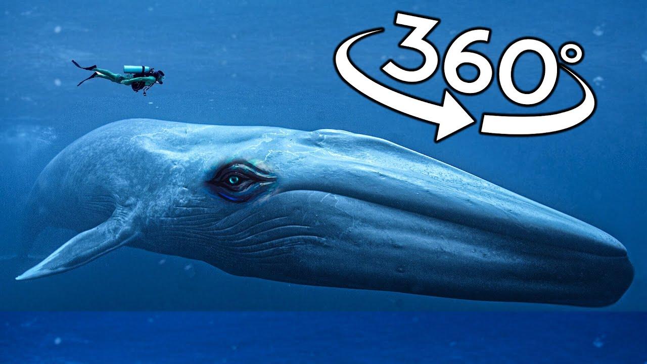 360 VR Video | Sharks, Blue Whale, Mantas, Giant Jellyfish (Underwater Deep Ocean)