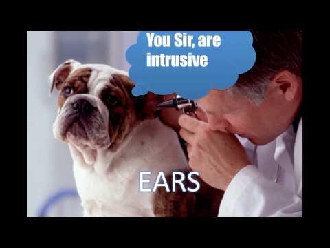 Ear Cytology (Veterinary Technician Education)