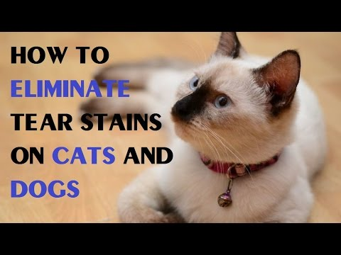 How to Eliminate Tear Stains on Cats and Dogs