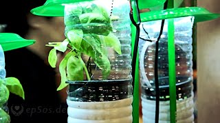 Hydroponic Farming System In Plastic Bottles And Led Lamps