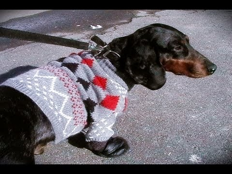 Wa'Ou #2 how to make a dog sweater and boots