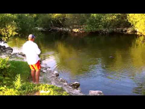Gator Tries Attempts To EAT Fisherman While Bass Fishing in the Florida Everglades!!