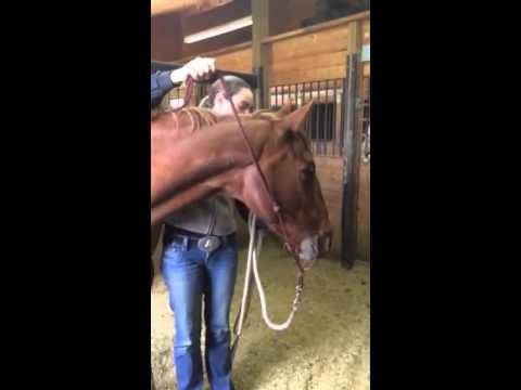 How To Tie Your Parelli Rope Halter