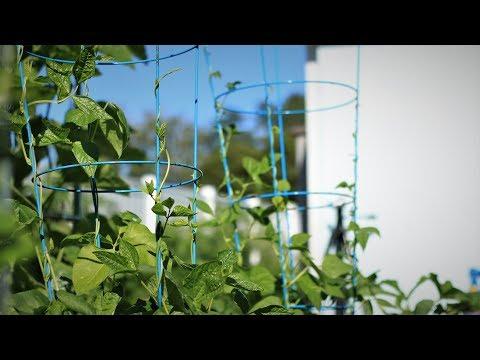 Green Thumb Festival: install trellis for potting vegetables