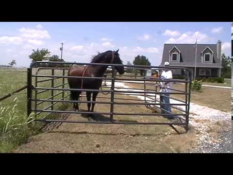 Trapping A Hurt or Wild Horse -  Emergency Horse Trailer Loading - Sacking Out