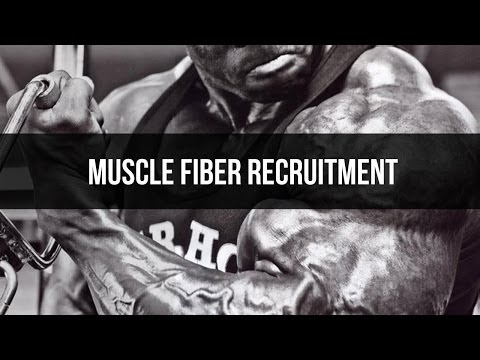 Muscle fiber recruitment and muscle building