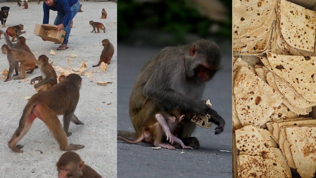 monkey love bread