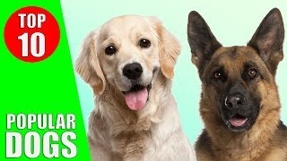 Top 10 Most Popular Dog Breeds in the World - Dogs 101 | Kiddopedia