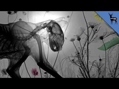 Dead Animal X-Ray Art