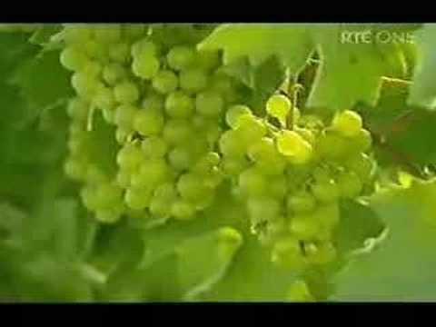 Greenbox Eco Eye Video. Ecotourism in Ireland.