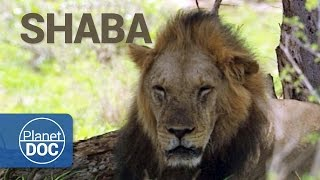 Full Documentary. Shaba. The Land of God and Devil