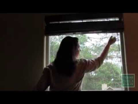 How to Keep Birds from Hitting Your Windows - Tips from a Wildlife Biologist