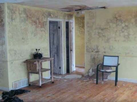 How to Recognize Signs of Mold in Your Home