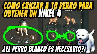 Conseguir Perro Nivel 4 | Como Cruzar Al Perro | Last Day On Earth: Survival