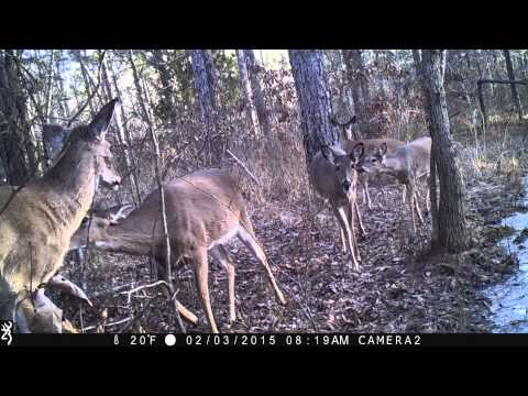 Using Past Trail Camera Pictures To Pattern Deer