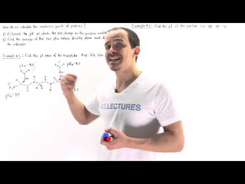 Calculating Isoelectric Point of Proteins (Example)