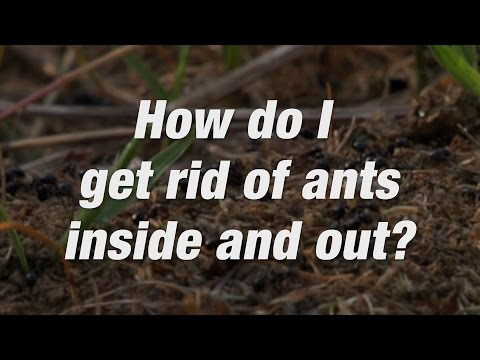 How to Get Rid of Ants Around Your Home | Ortho