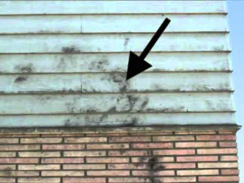Exterior House Toxic Mold - What Does It Look like?