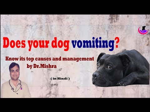 Vomiting in Dog/Puppy: Top causes and Management Hindi