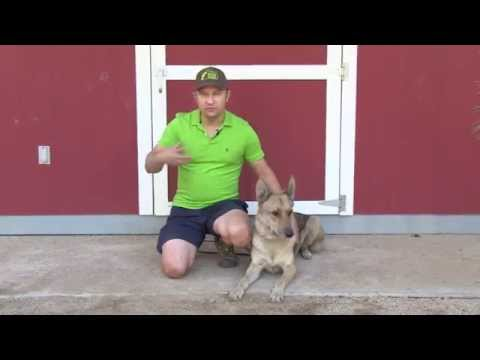Abel Bailey - Service Dog Training - Update #1