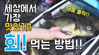 세상에서 가장 맛있게 볼락회 먹는 방법!!!! Freshest Rockfish Raw fish(Sashimi)!!!!