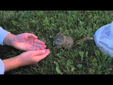 The Baby Squirrel. Le bébé écureuil.