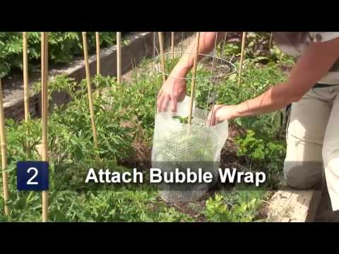 How to Protect Tomato Plants With Bubble Wrap