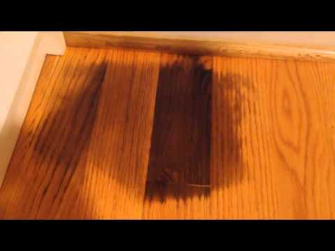Remove pet urine on hardwood floor